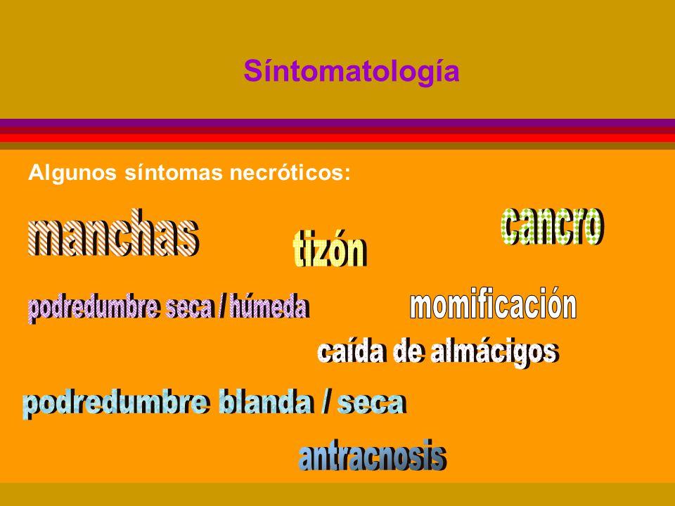 podredumbre seca / húmeda podredumbre blanda / seca