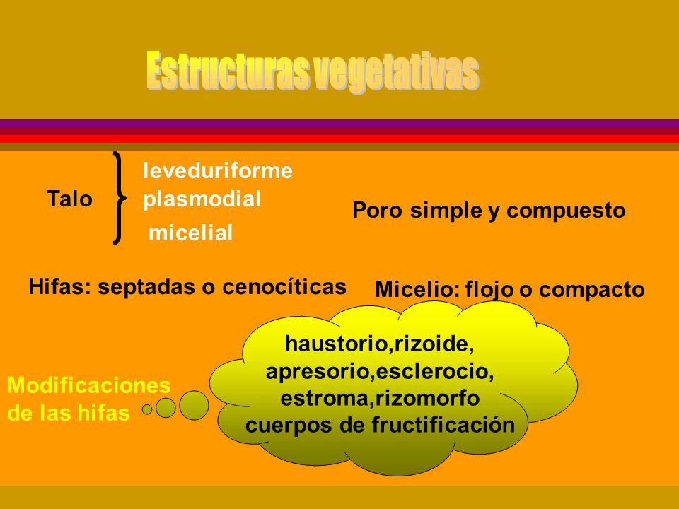 Estructuras vegetativas cuerpos de fructificación