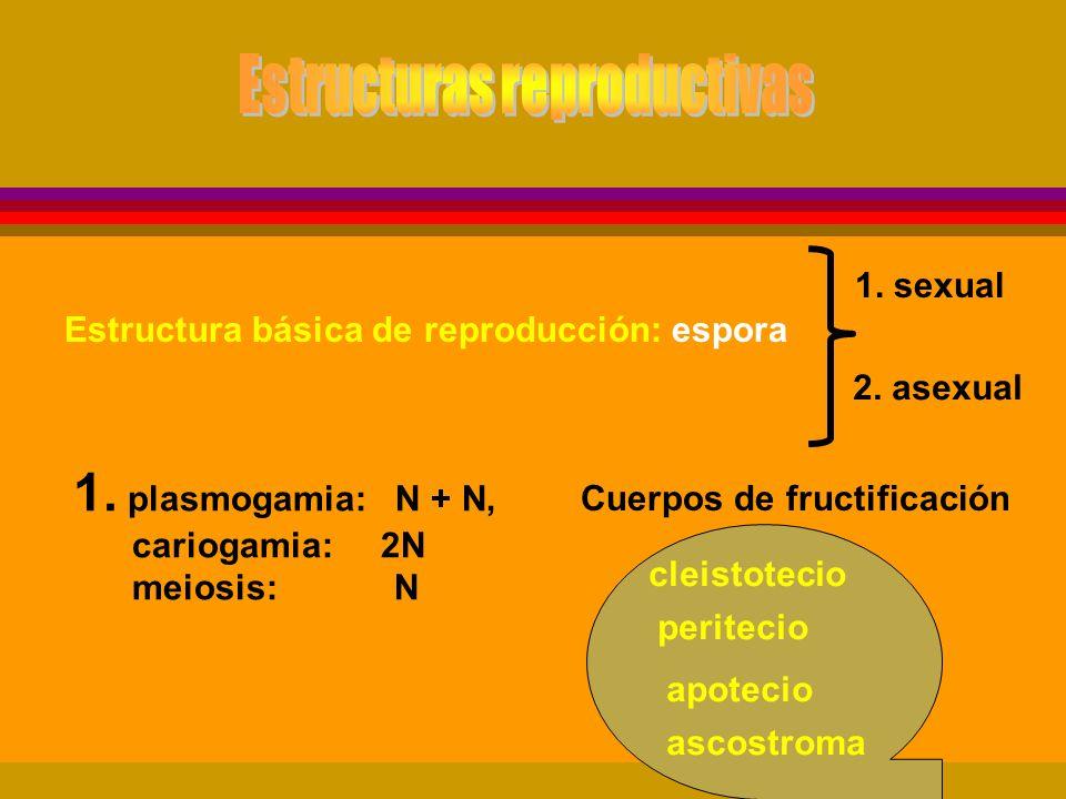 Estructuras reproductivas