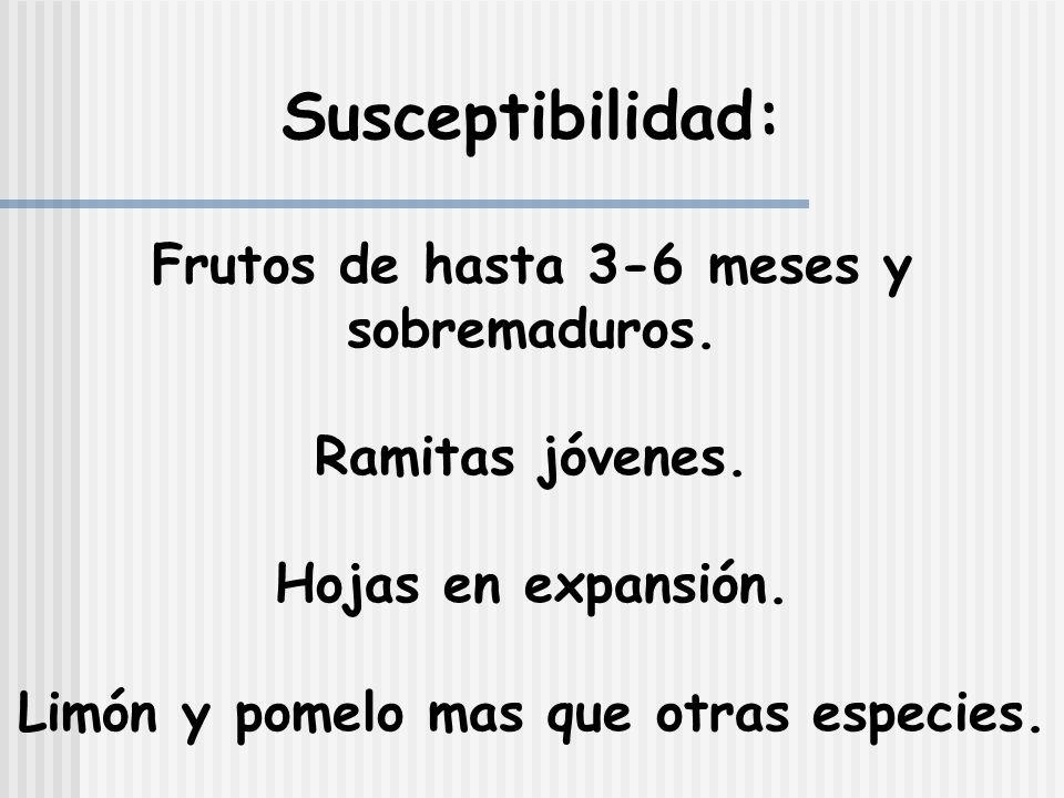 Susceptibilidad: Frutos de hasta 3-6 meses y sobremaduros.