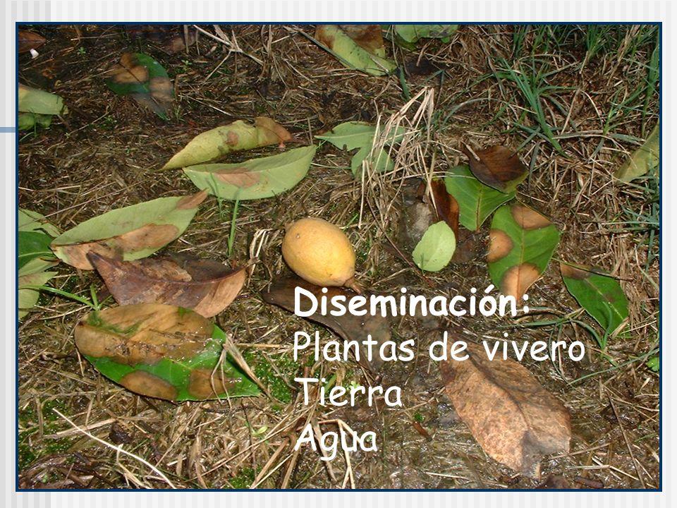 Diseminación: Plantas de vivero Tierra Agua