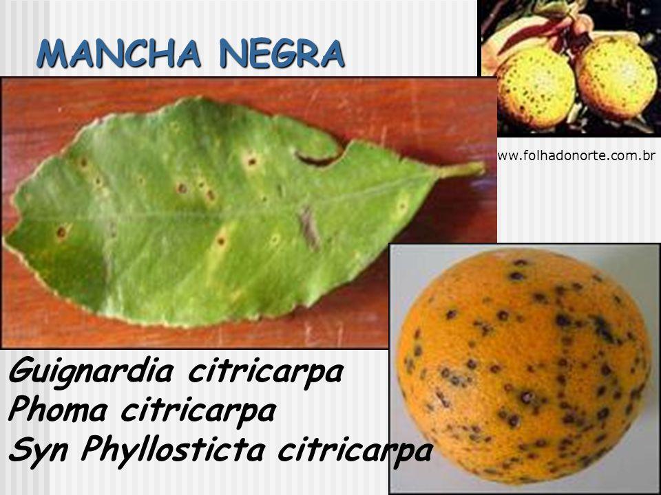 MANCHA NEGRA Guignardia citricarpa Phoma citricarpa