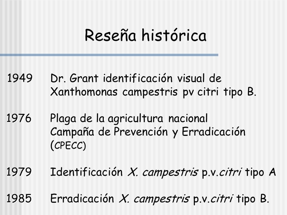 Reseña histórica 1949 Dr. Grant identificación visual de Xanthomonas campestris pv citri tipo B.