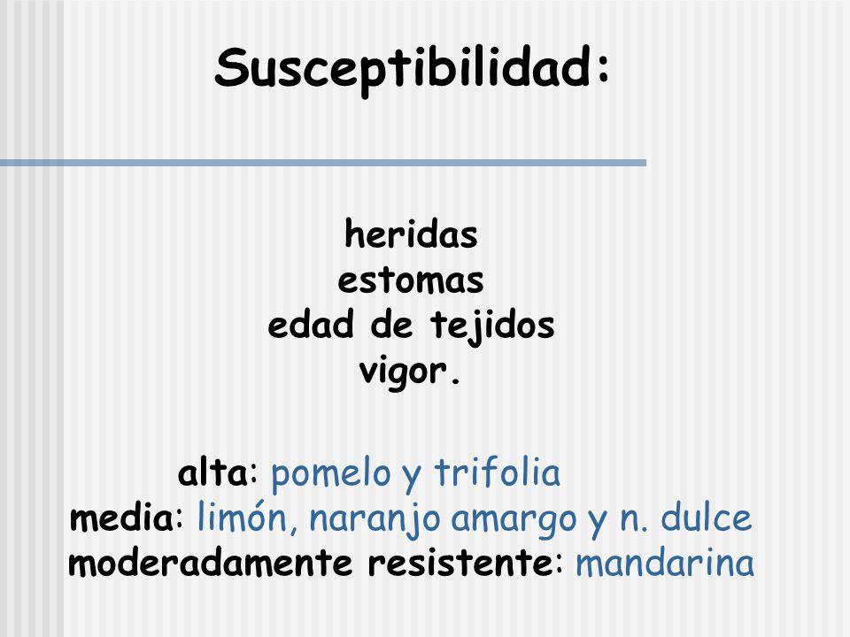 Susceptibilidad: estomas edad de tejidos vigor.