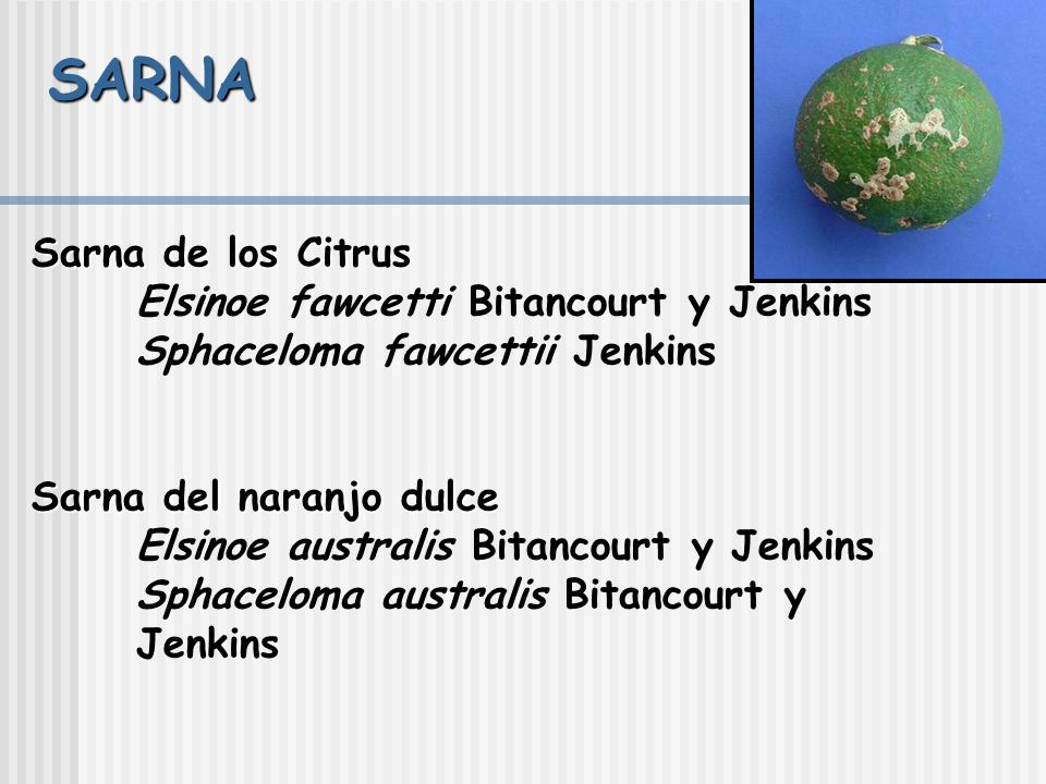SARNA Sarna de los Citrus Elsinoe fawcetti Bitancourt y Jenkins