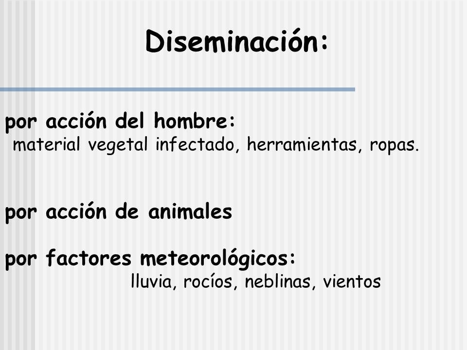Diseminación: por acción del hombre: por acción de animales