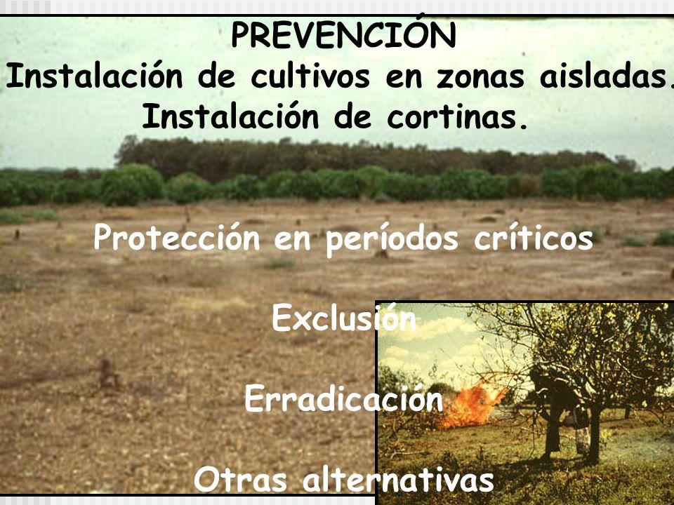 Instalación de cultivos en zonas aisladas. Instalación de cortinas.