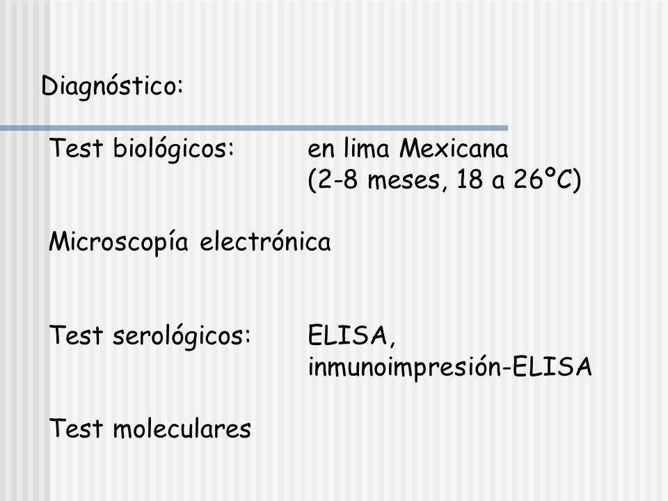Diagnóstico: Test biológicos: en lima Mexicana. (2-8 meses, 18 a 26ºC) Microscopía electrónica.