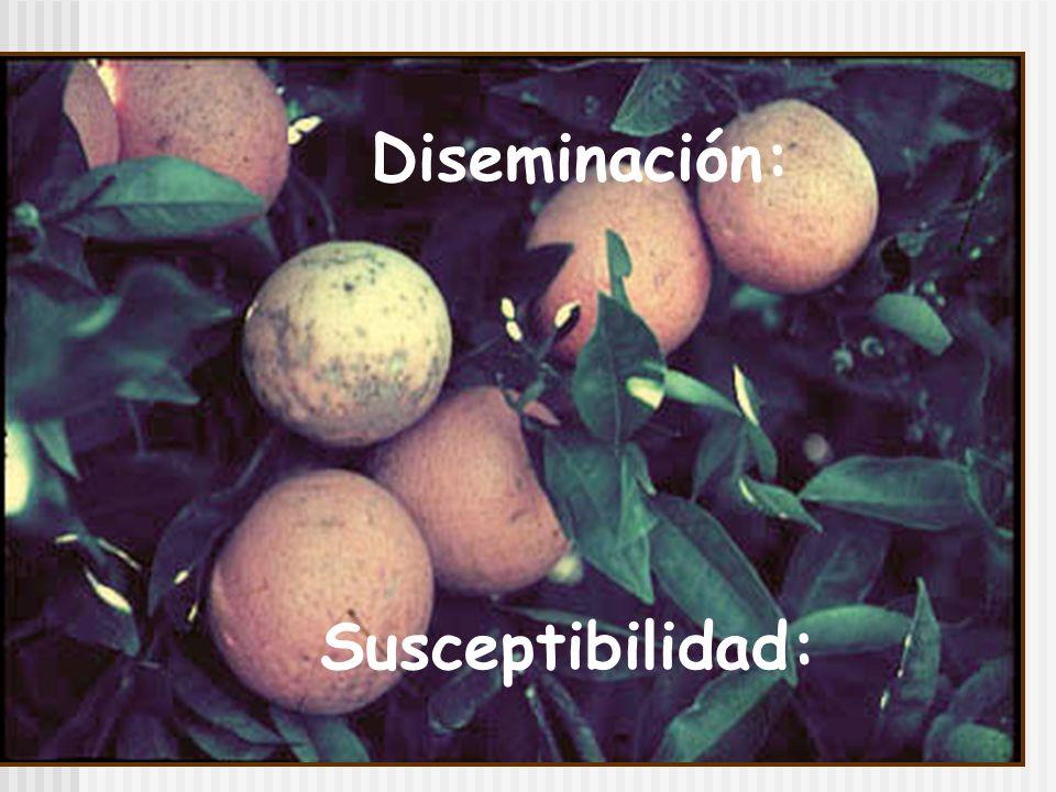 Diseminación: Susceptibilidad: