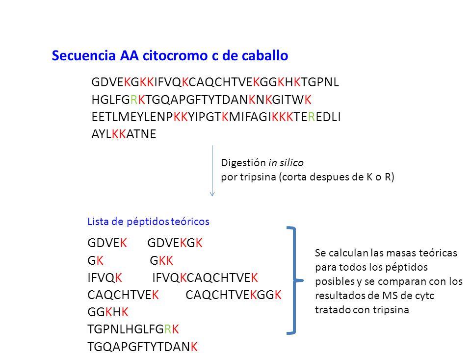 Secuencia AA citocromo c de caballo
