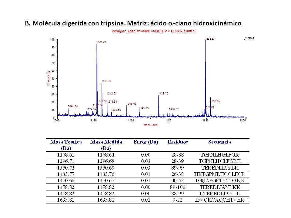 B. Molécula digerida con tripsina