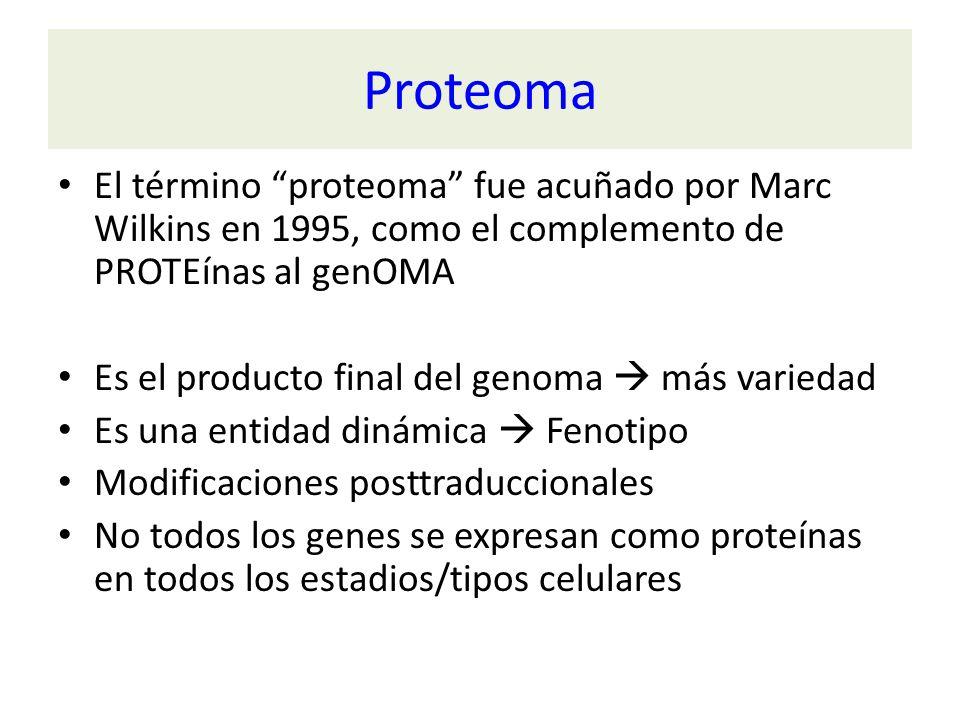 Proteoma El término proteoma fue acuñado por Marc Wilkins en 1995, como el complemento de PROTEínas al genOMA.