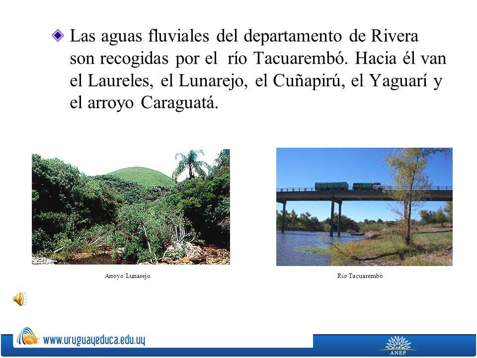 Las aguas fluviales del departamento de Rivera son recogidas por el río Tacuarembó. Hacia él van el Laureles, el Lunarejo, el Cuñapirú, el Yaguarí y el arroyo Caraguatá.