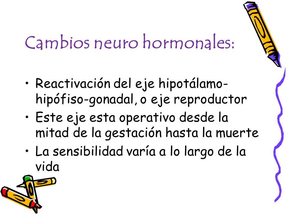 Cambios neuro hormonales: