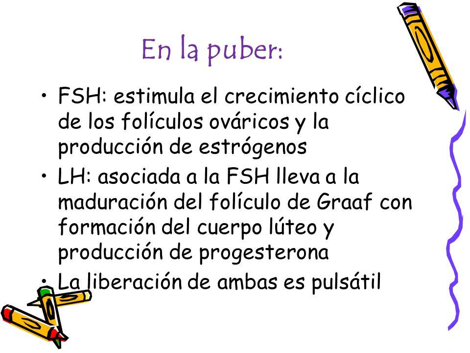En la puber: FSH: estimula el crecimiento cíclico de los folículos ováricos y la producción de estrógenos.