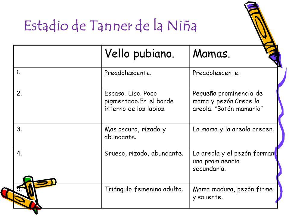 Estadio de Tanner de la Niña