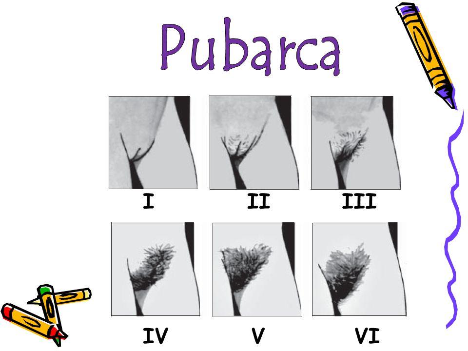 Pubarca I II III IV V VI