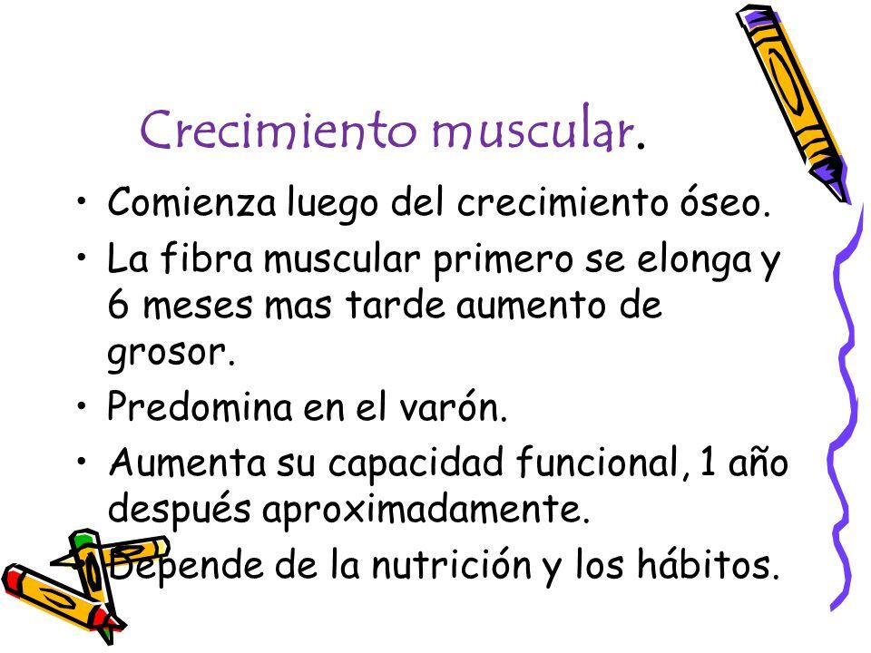 Crecimiento muscular. Comienza luego del crecimiento óseo.