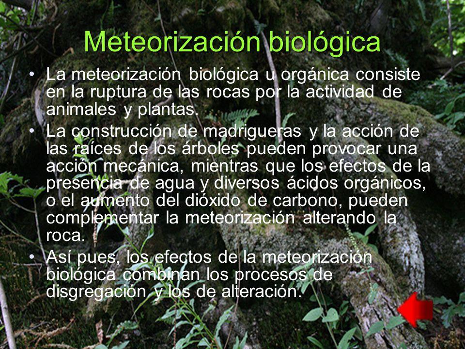 Meteorización biológica