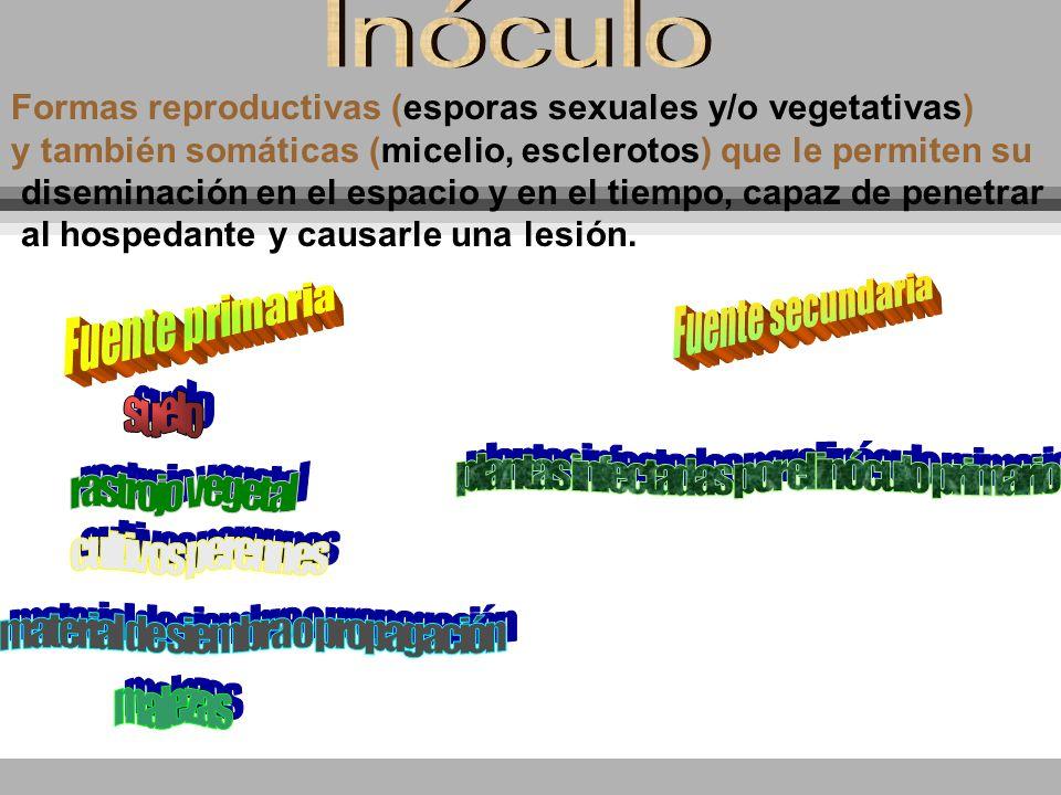 Inóculo Formas reproductivas (esporas sexuales y/o vegetativas)