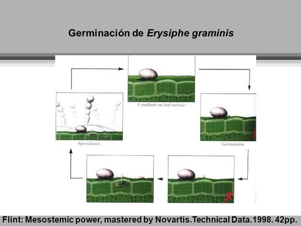 Germinación de Erysiphe graminis