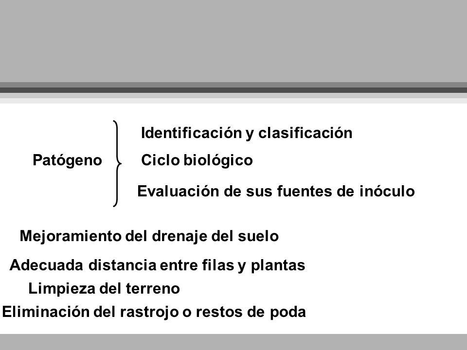 Identificación y clasificación