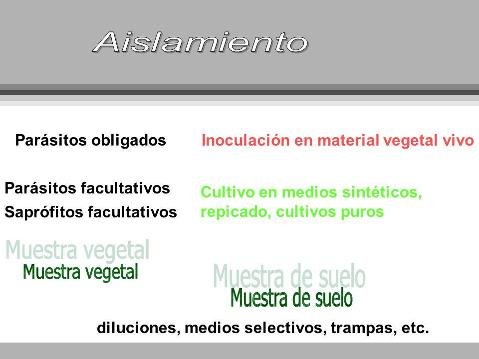 Parásitos facultativos Saprófitos facultativos