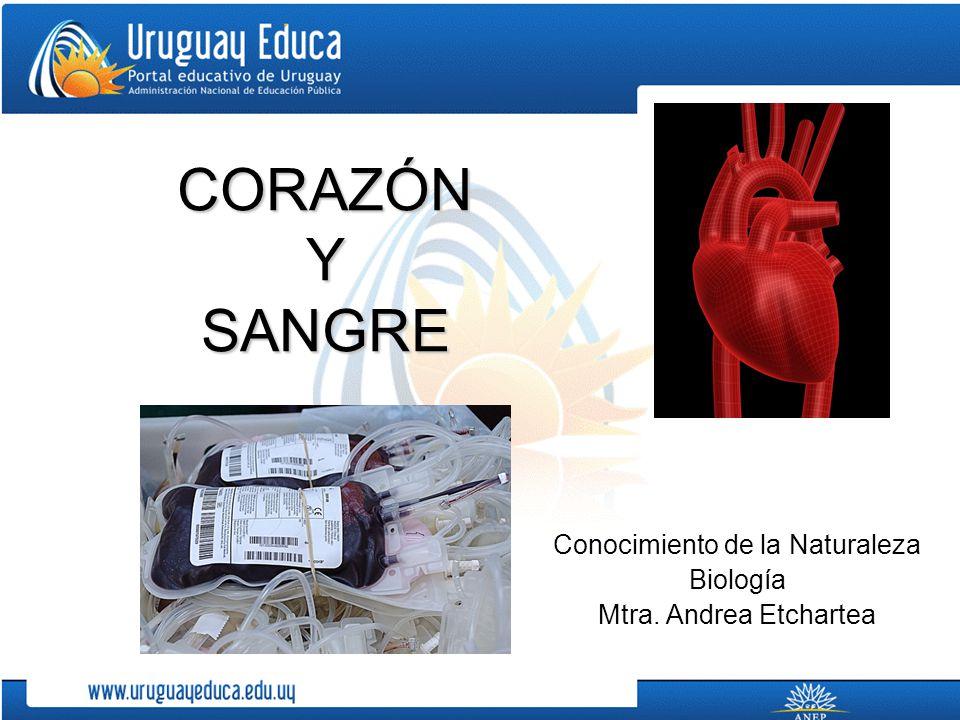 Conocimiento de la Naturaleza Biología Mtra. Andrea Etchartea
