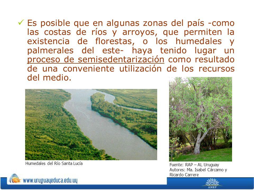 Es posible que en algunas zonas del país -como las costas de ríos y arroyos, que permiten la existencia de florestas, o los humedales y palmerales del este- haya tenido lugar un proceso de semisedentarización como resultado de una conveniente utilización de los recursos del medio.