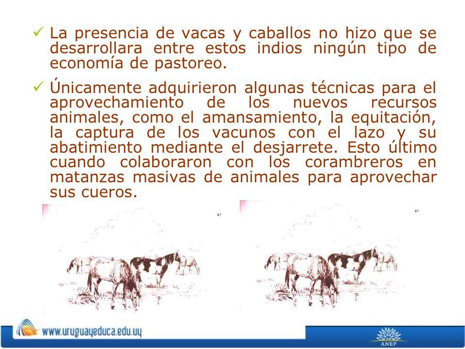 La presencia de vacas y caballos no hizo que se desarrollara entre estos indios ningún tipo de economía de pastoreo.