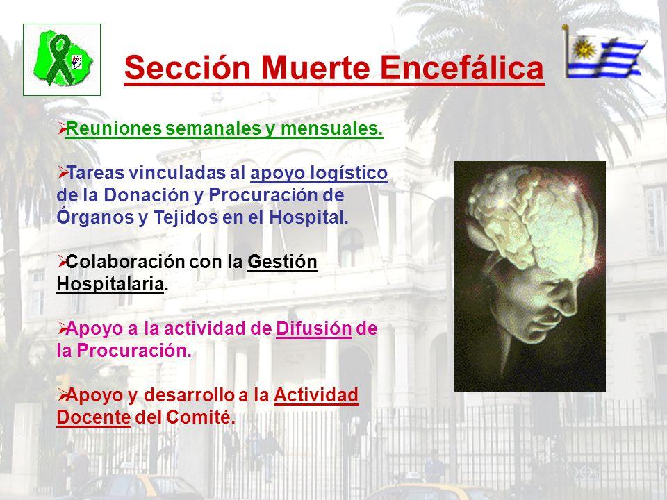 Sección Muerte Encefálica