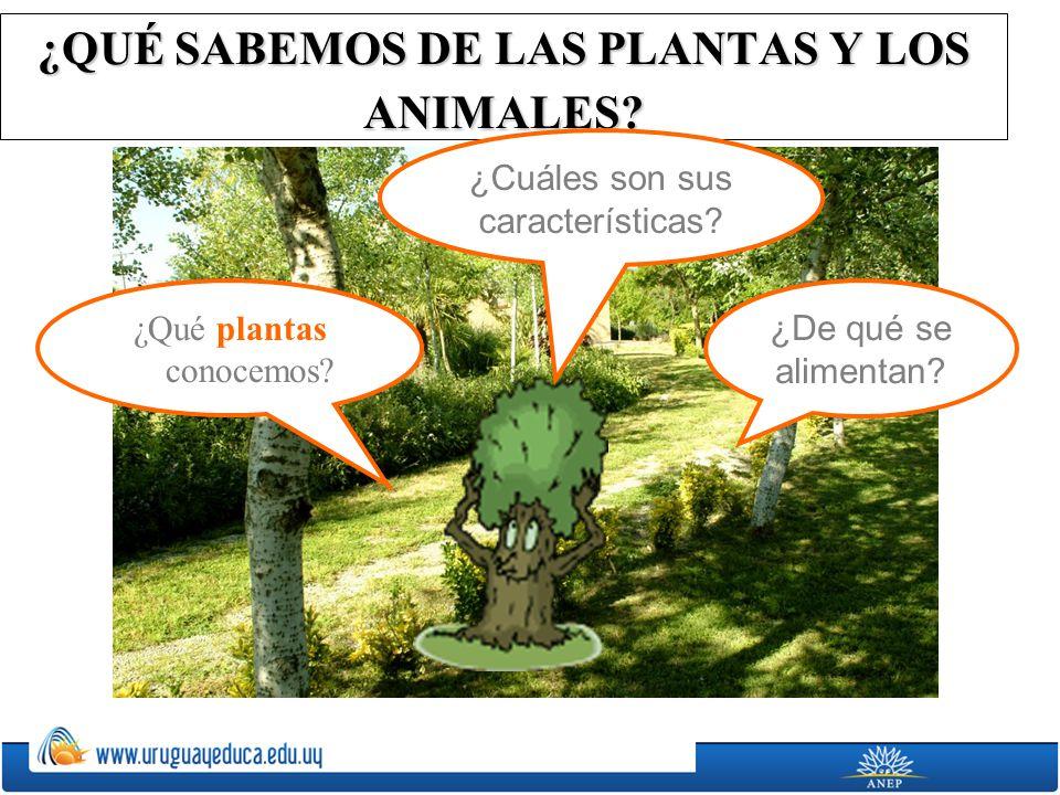¿QUÉ SABEMOS DE LAS PLANTAS Y LOS ANIMALES