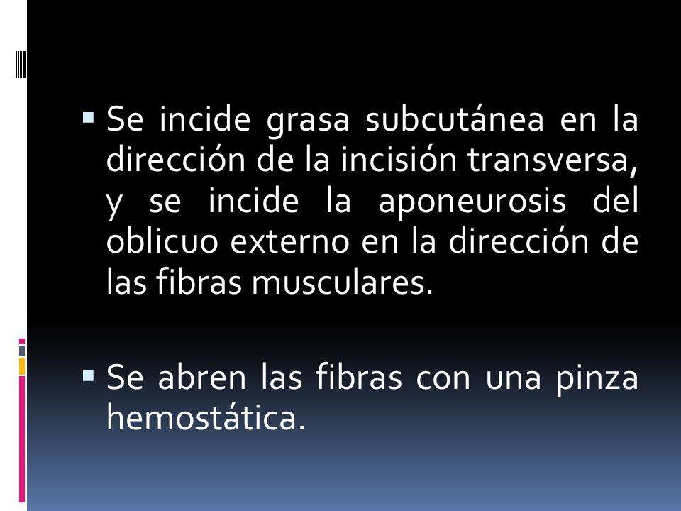 Se incide grasa subcutánea en la dirección de la incisión transversa, y se incide la aponeurosis del oblicuo externo en la dirección de las fibras musculares.
