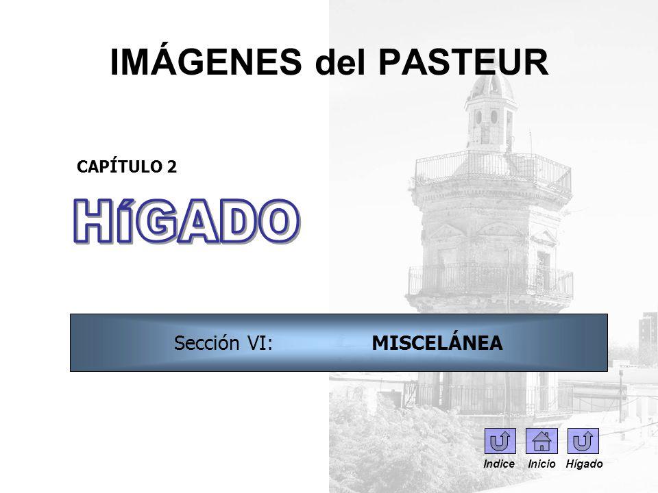 Sección VI: MISCELÁNEA