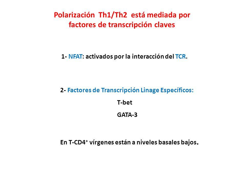 Polarización Th1/Th2 está mediada por factores de transcripción claves