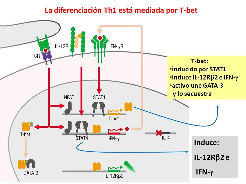 La diferenciación Th1 está mediada por T-bet