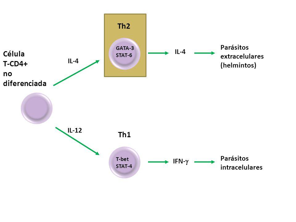 Th2 Célula T-CD4+ no diferenciada Th1 Parásitos extracelulares