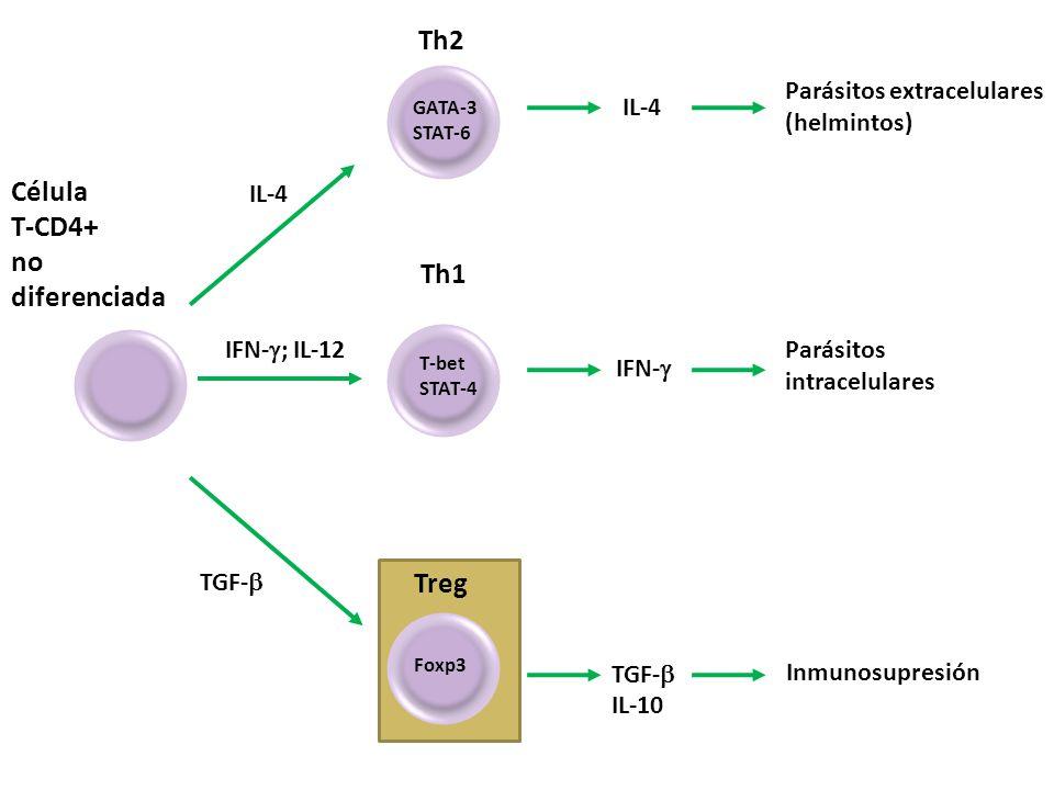 Th2 Célula T-CD4+ no diferenciada Th1 Treg Parásitos extracelulares