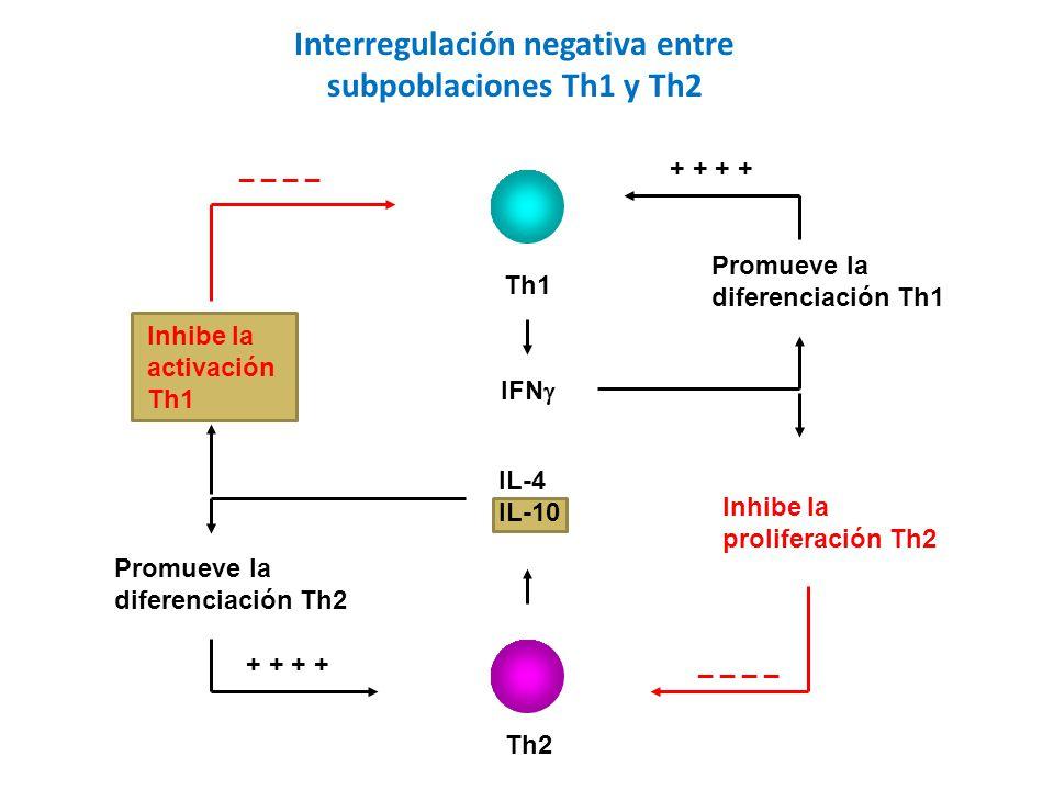 Interregulación negativa entre
