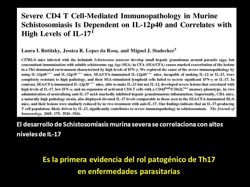 Es la primera evidencia del rol patogénico de Th17