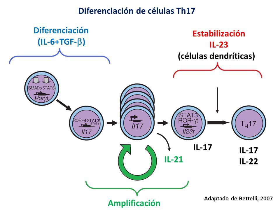 Diferenciación de células Th17