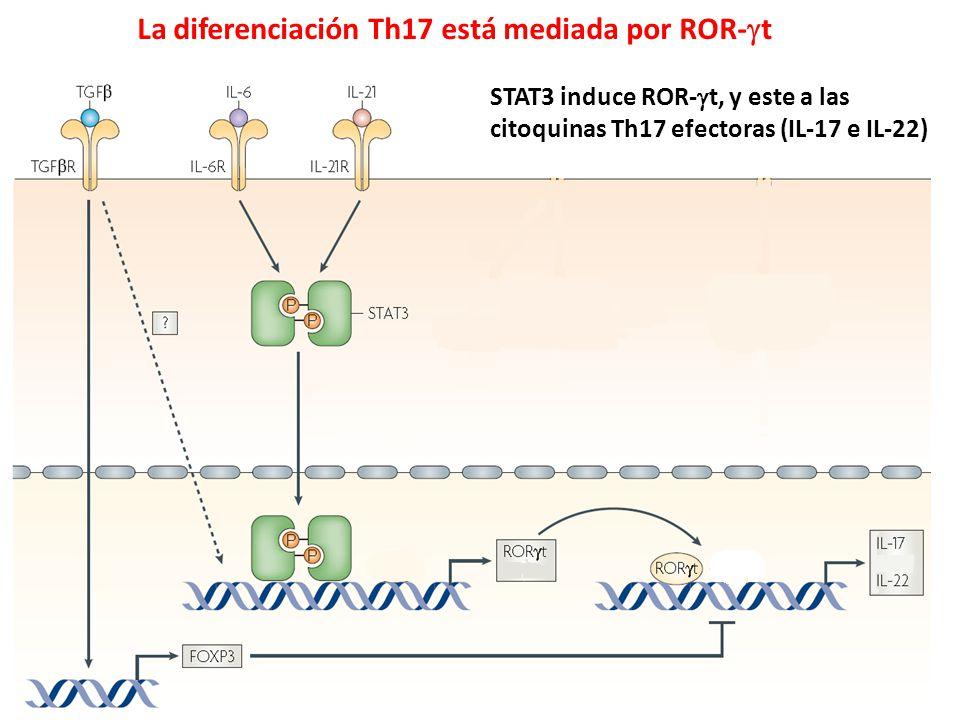 La diferenciación Th17 está mediada por ROR-t