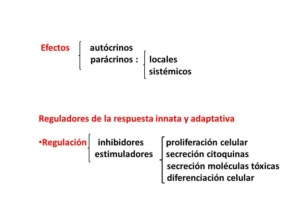 Efectos autócrinos parácrinos : locales. sistémicos. Reguladores de la respuesta innata y adaptativa.