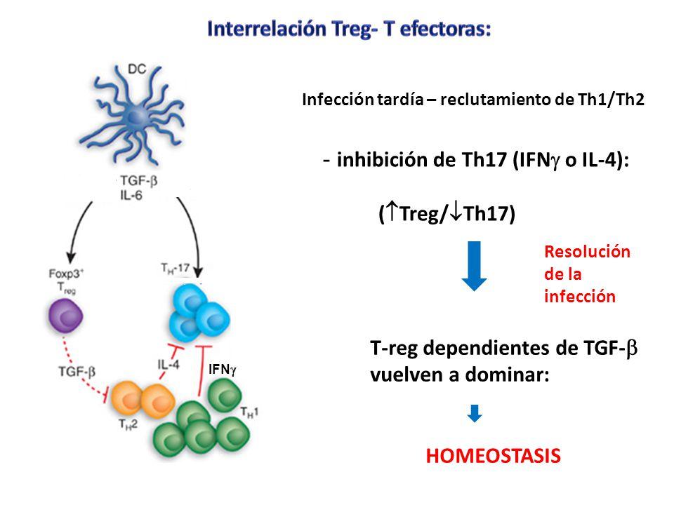 Interrelación Treg- T efectoras: