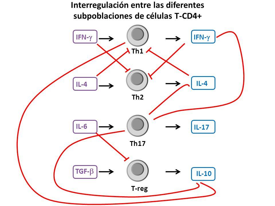 Interregulación entre las diferentes subpoblaciones de células T-CD4+