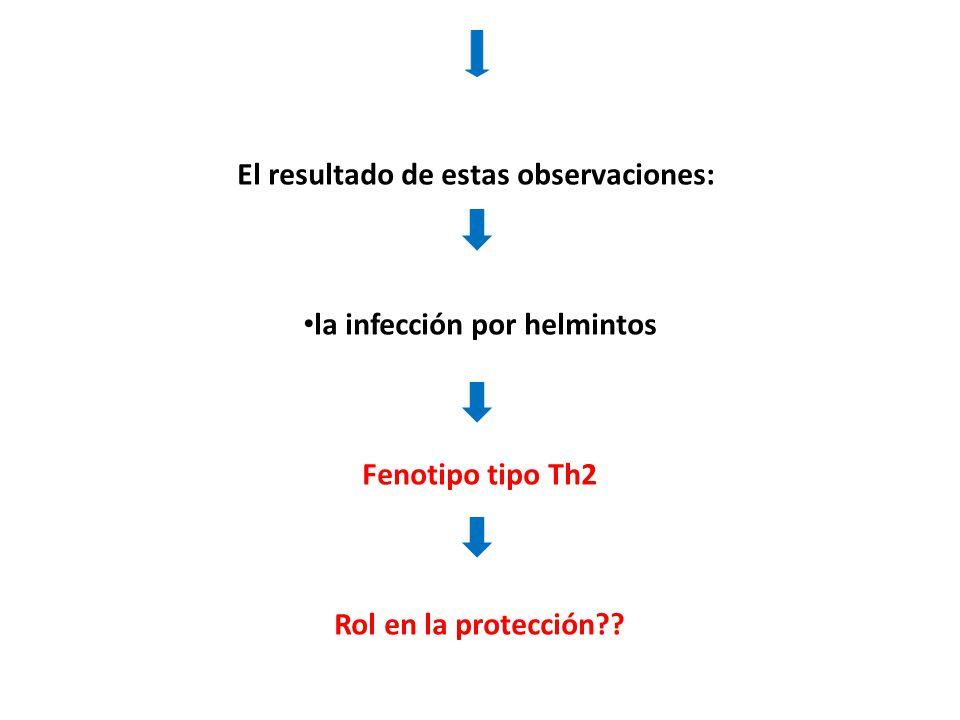 El resultado de estas observaciones: la infección por helmintos