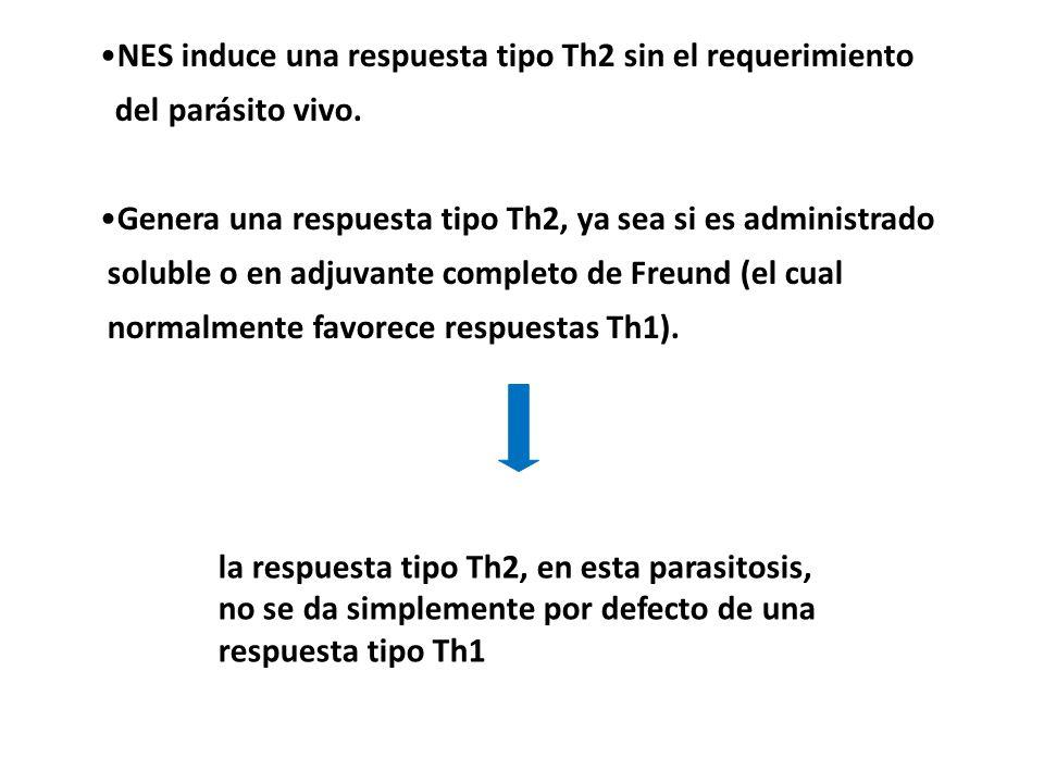 NES induce una respuesta tipo Th2 sin el requerimiento