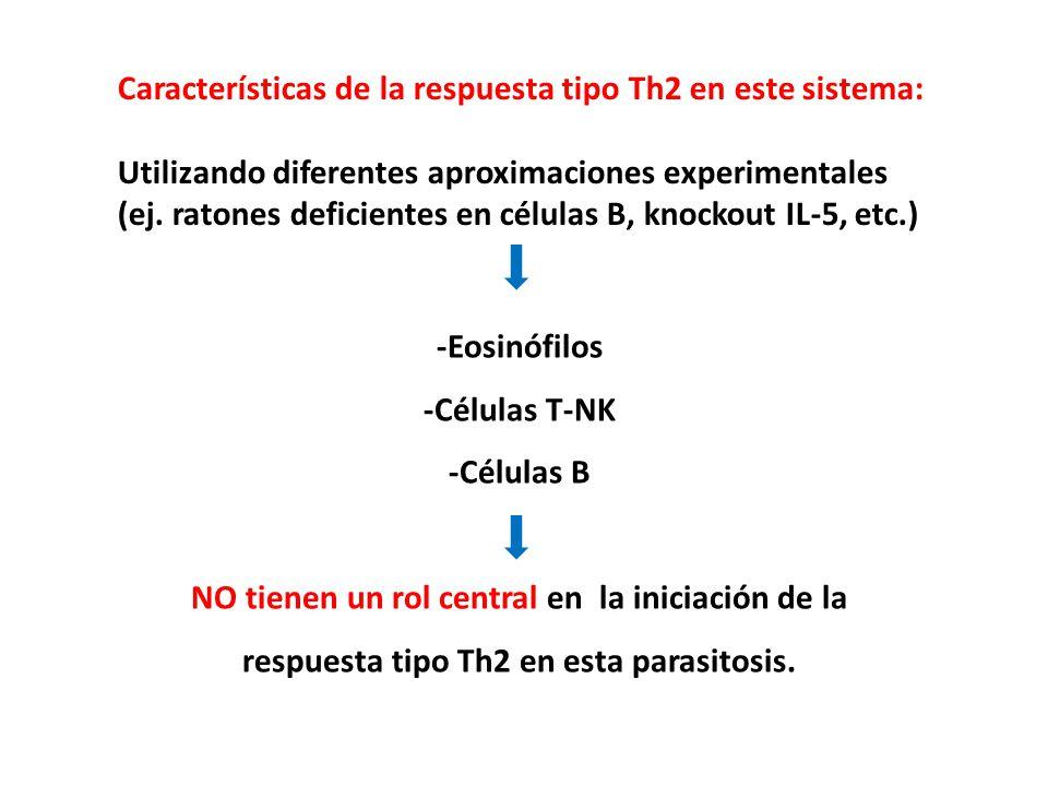 Características de la respuesta tipo Th2 en este sistema: