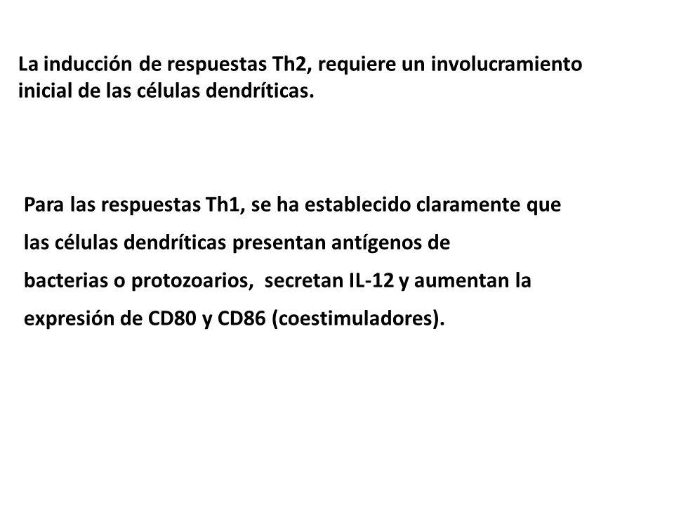 La inducción de respuestas Th2, requiere un involucramiento