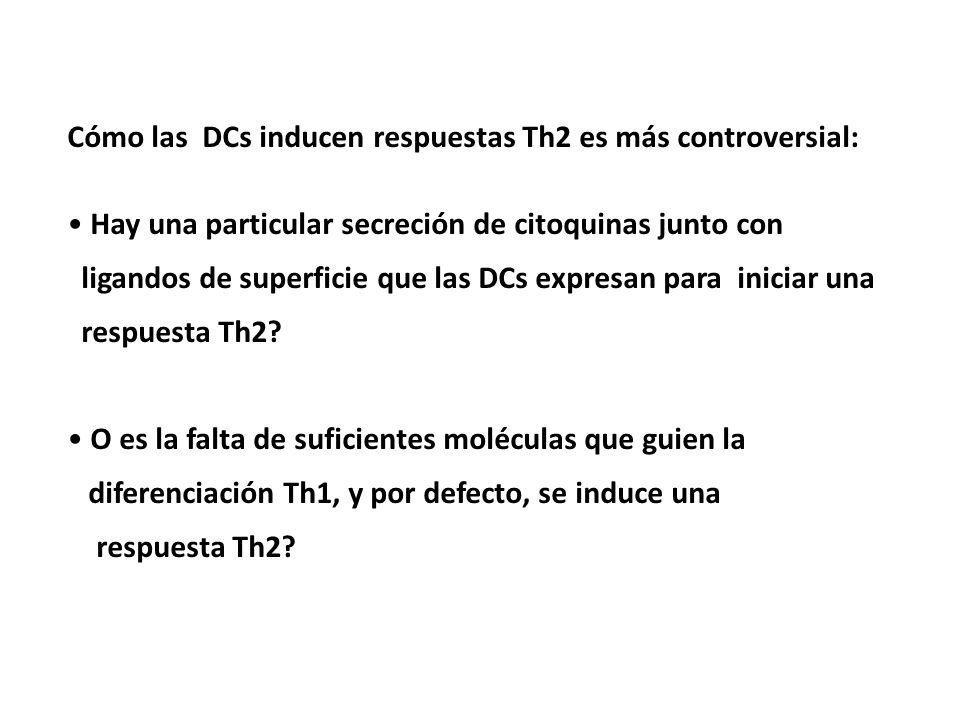 Cómo las DCs inducen respuestas Th2 es más controversial: